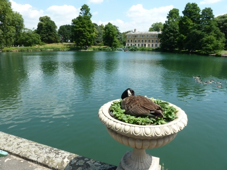 Bird Nesting Kew Garden